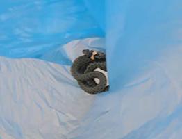 mini wąż